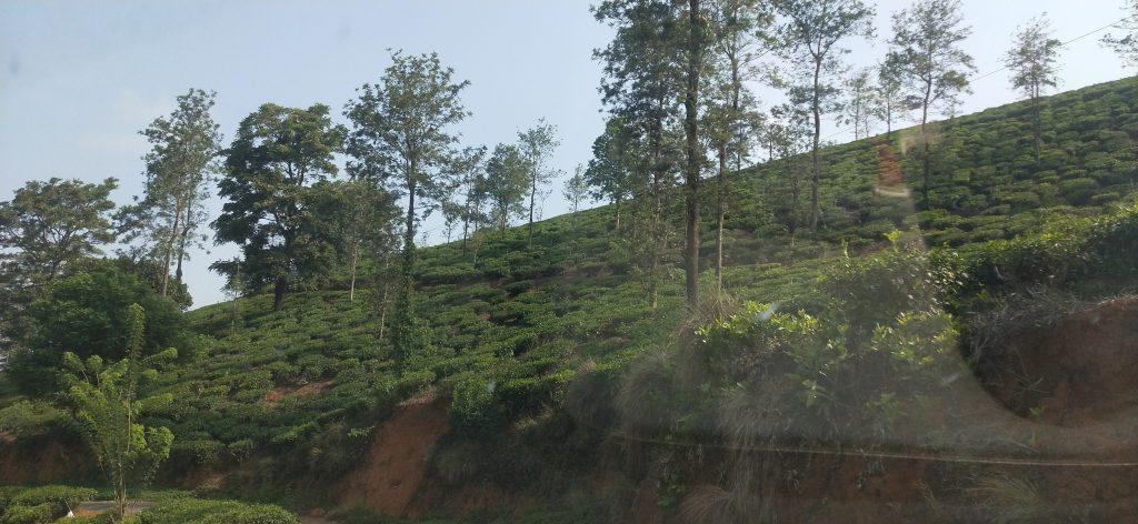 priyadarshini tea environs